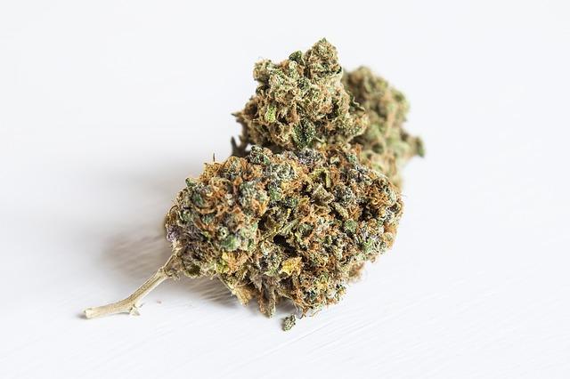 A bud of marijuana